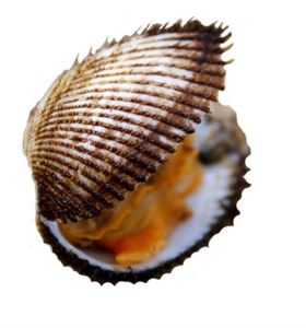 Picture of ARKSHELL