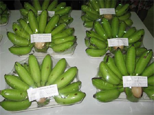Picture of BANANAS NGU DAI HOANG