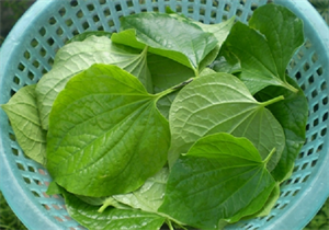 Picture of GUISE LEAVES