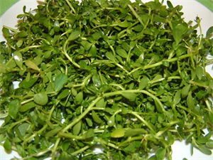 Picture of BITTER HERBS