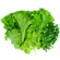 Picture of LETTUCE