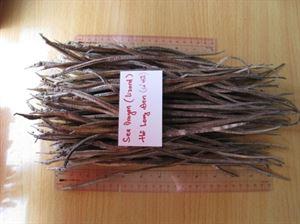 Picture of Dried sea dragon